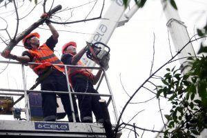 Сотрудники «Жилищника» удалили сухостойные деревья в районе. Фото: архив, «Вечерняя Москва»