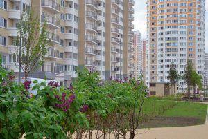 Работы по озеленению провели в районе. Фото: Анна Быкова