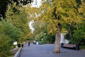Санитарную обрезку деревьев на улице Шаболовка завершат в скором времени. Фото: Анна Быкова
