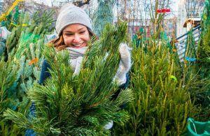 Пункты приема елок на переработку открыли в районе. Фото: сайт мэра Москвы