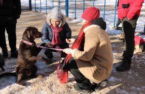 Представители Молодежной палаты района организовали занятие по дрессировке собак. Фото: Молодежная палата района Якиманка