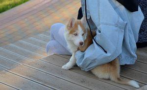 Занятие «Читаем вместе с собакой» состоится в Российской детской библиотеке. Фото: Анна Быкова