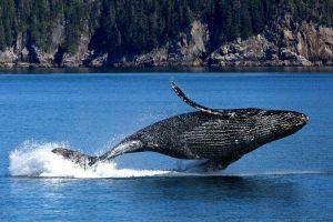 Материал о Всемирном дне китов и дельфинов опубликовали в школе №1799. Фото: pixabay.com
